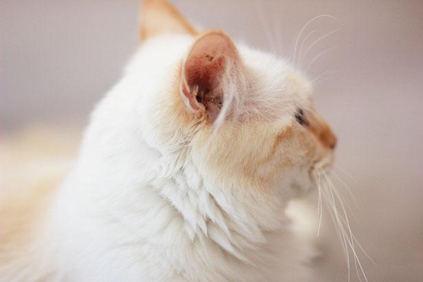cat-blog-mode-tendance